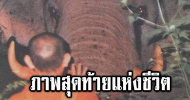 """""""งางอน"""" ตำนานช้างคู่ผู้ยิ่งใหญ่"""